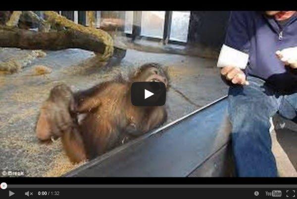הצחיק_את_הקוף