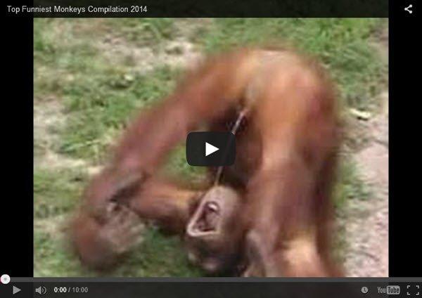 אוסף_קופים