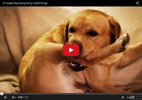 הכלבים_החכמים