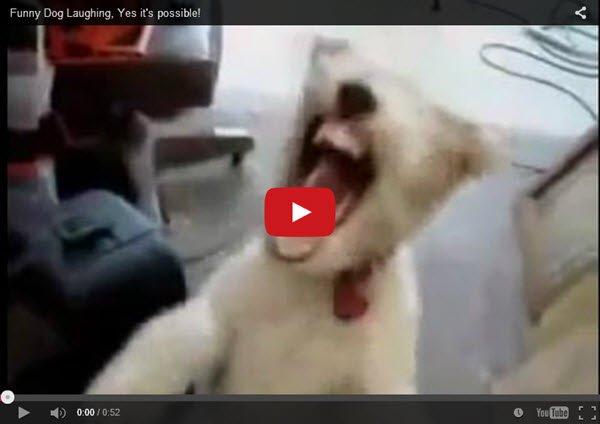 כלב_לצחוק