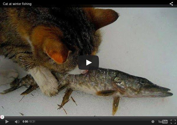 חתול_בדיג_חורף