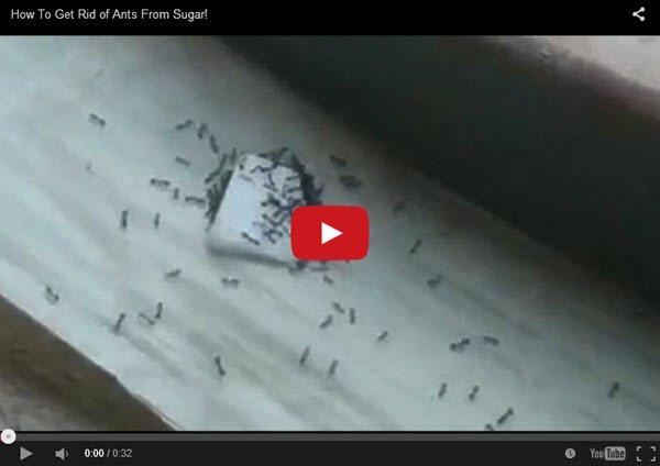 איך_להיפטר_מנמלים