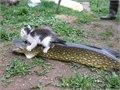 לא ניראלי החתול הזה יתן לכם לגעת בדג שלו...