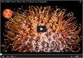 וידאו הפשרה מאקרו של פירות וירקות, מדהים!